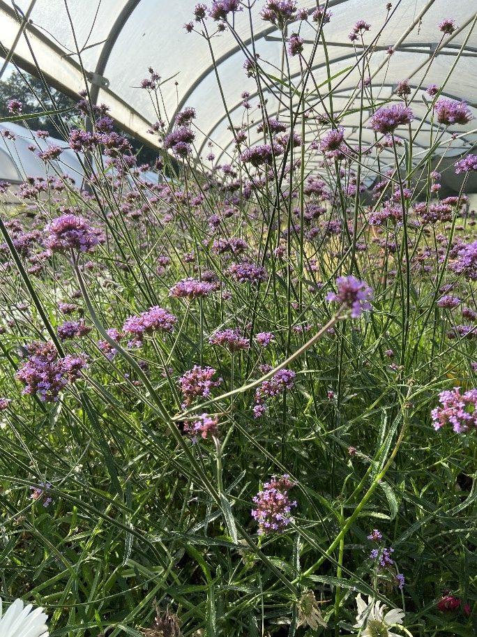 Fleurs dans les serres de Meudon-la-Forêt.
