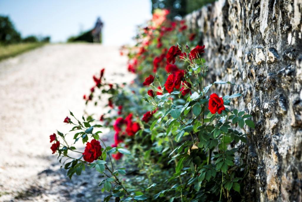 Fleurs rouges au bord de la terrasse de l'Observatoire de Meudon